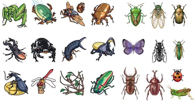 Từ vựng tiếng Anh về các loại côn trùng