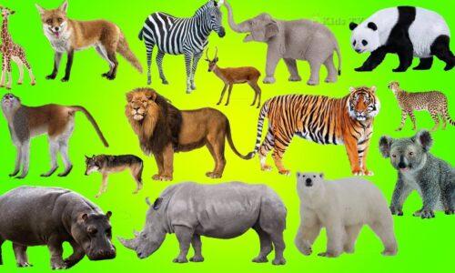 Tổng hợp từ vựng tiếng Anh về các loài động vật thường gặp