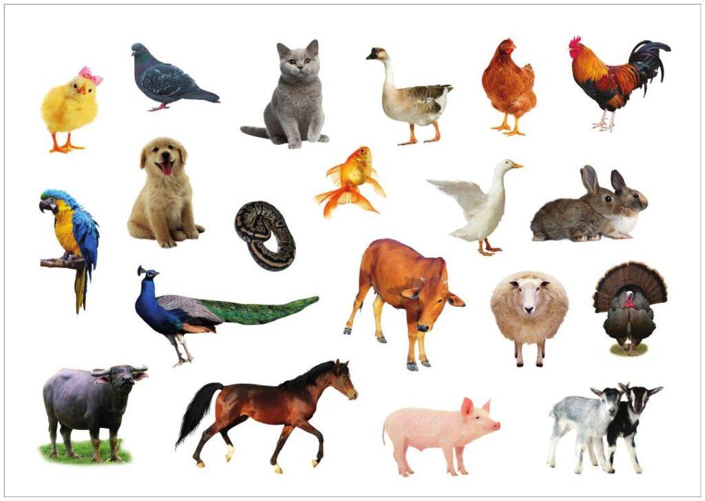 Từ vựng tiếng Anh về những loài vật nuôi