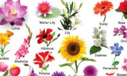 Từ vựng tiếng Anh về các loài hoa – 200+ tên loài hoa bằng tiếng Anh
