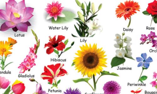 Từ vựng tiếng Anh về các loài hoa - 200+ tên loài hoa bằng tiếng Anh